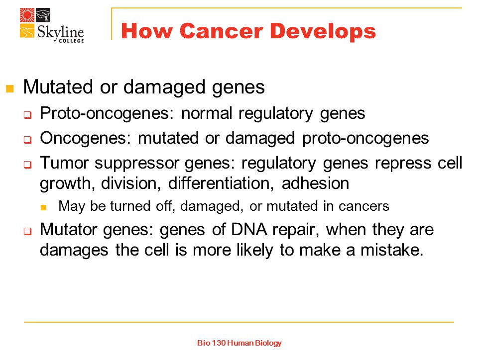 Bio 130 Human Biology How Cancer Develops Mutated or damaged genes  Proto-oncogenes: normal regulatory genes  Oncogenes: mutated or damaged proto-oncogenes  Tumor suppressor genes: regulatory genes repress cell growth, division, differentiation, adhesion May be turned off, damaged, or mutated in cancers  Mutator genes: genes of DNA repair, when they are damages the cell is more likely to make a mistake.