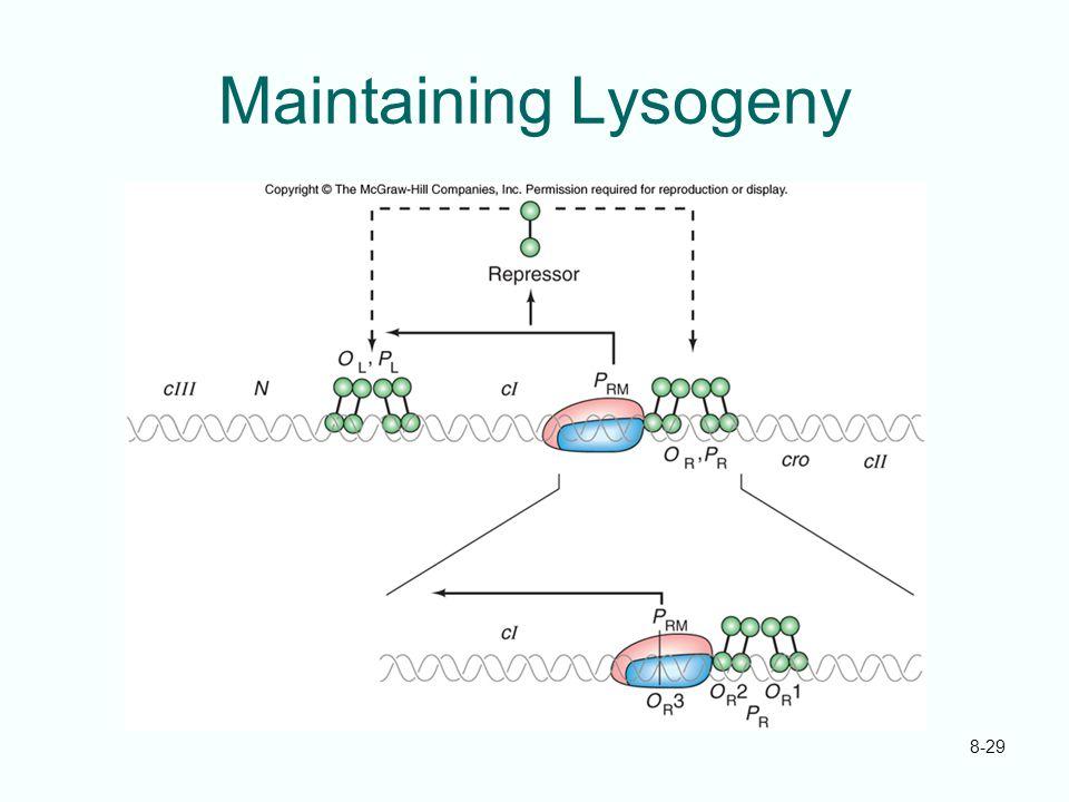 8-29 Maintaining Lysogeny