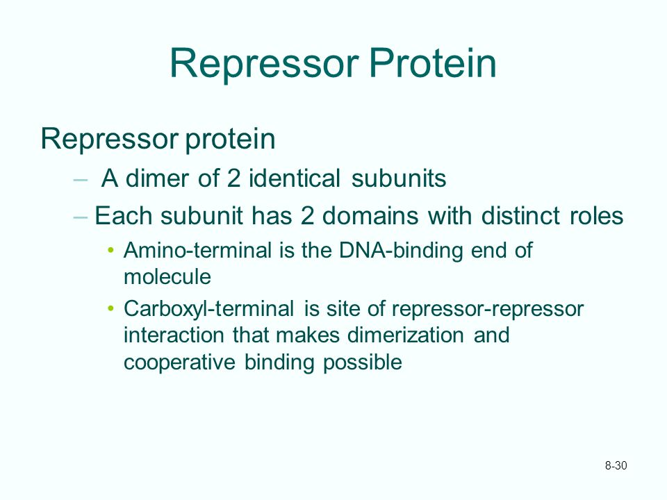 8-30 Repressor Protein Repressor protein – A dimer of 2 identical subunits –Each subunit has 2 domains with distinct roles Amino-terminal is the DNA-b