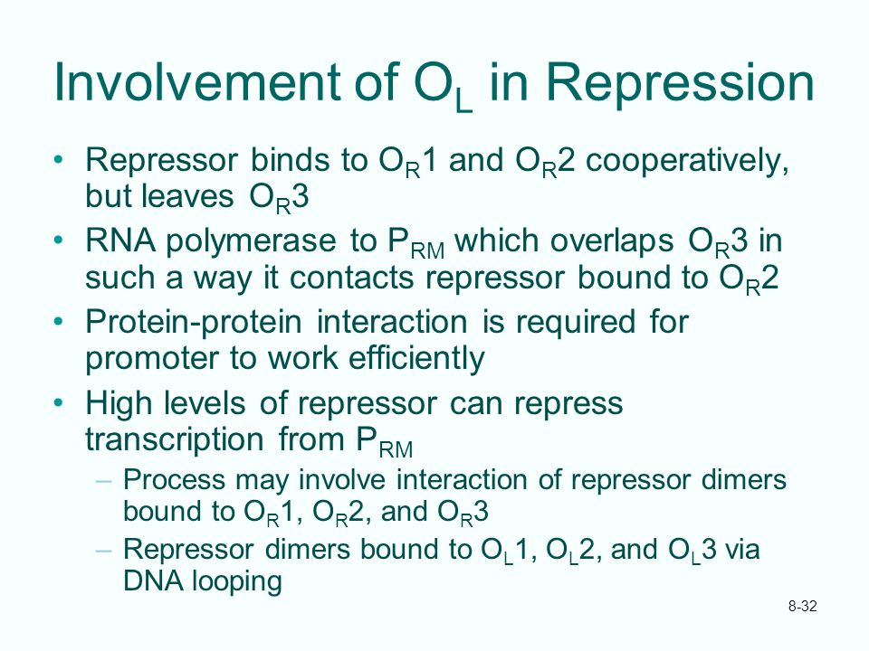 8-32 Involvement of O L in Repression Repressor binds to O R 1 and O R 2 cooperatively, but leaves O R 3 RNA polymerase to P RM which overlaps O R 3 i