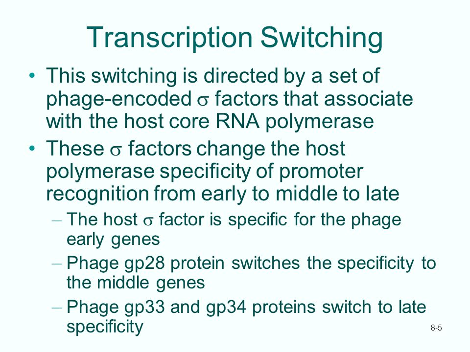 8-5 Transcription Switching This switching is directed by a set of phage-encoded  factors that associate with the host core RNA polymerase These  fa