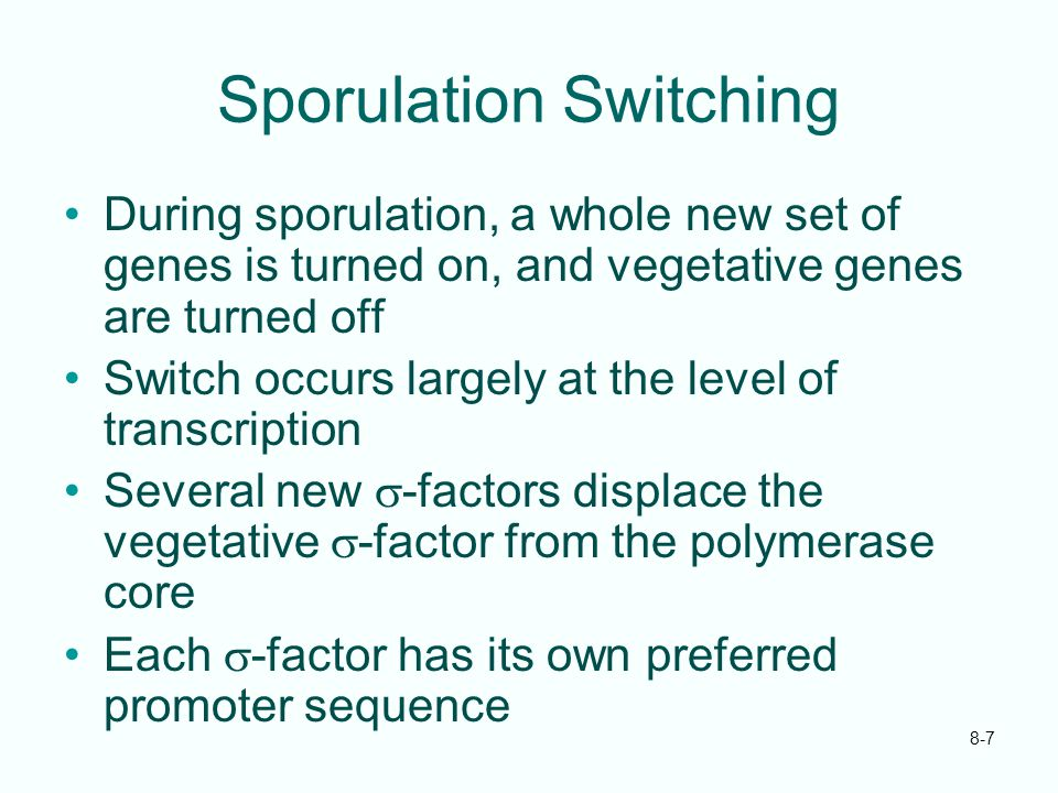 8-7 Sporulation Switching During sporulation, a whole new set of genes is turned on, and vegetative genes are turned off Switch occurs largely at the