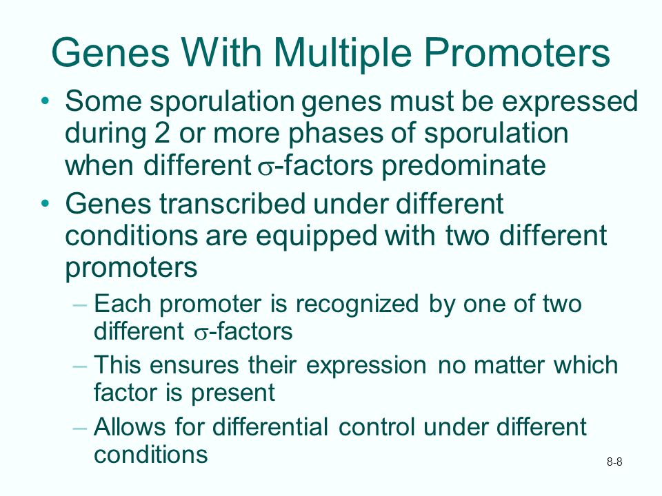 8-8 Genes With Multiple Promoters Some sporulation genes must be expressed during 2 or more phases of sporulation when different  -factors predominat