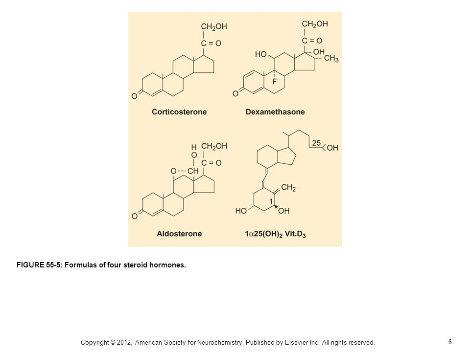7 FIGURE 55-6: Biosynthesis/metabolism of steroids in the CNS.