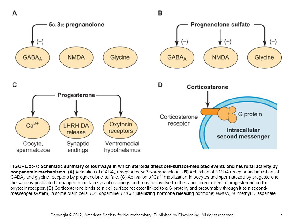 8 FIGURE 55-7: Schematic summary of four ways in which steroids affect cell-surface-mediated events and neuronal activity by nongenomic mechanisms.