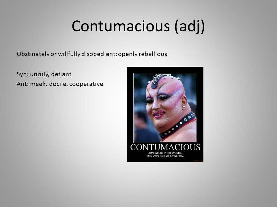 Contumacious (adj) Obstinately or willfully disobedient; openly rebellious Syn: unruly, defiant Ant: meek, docile, cooperative