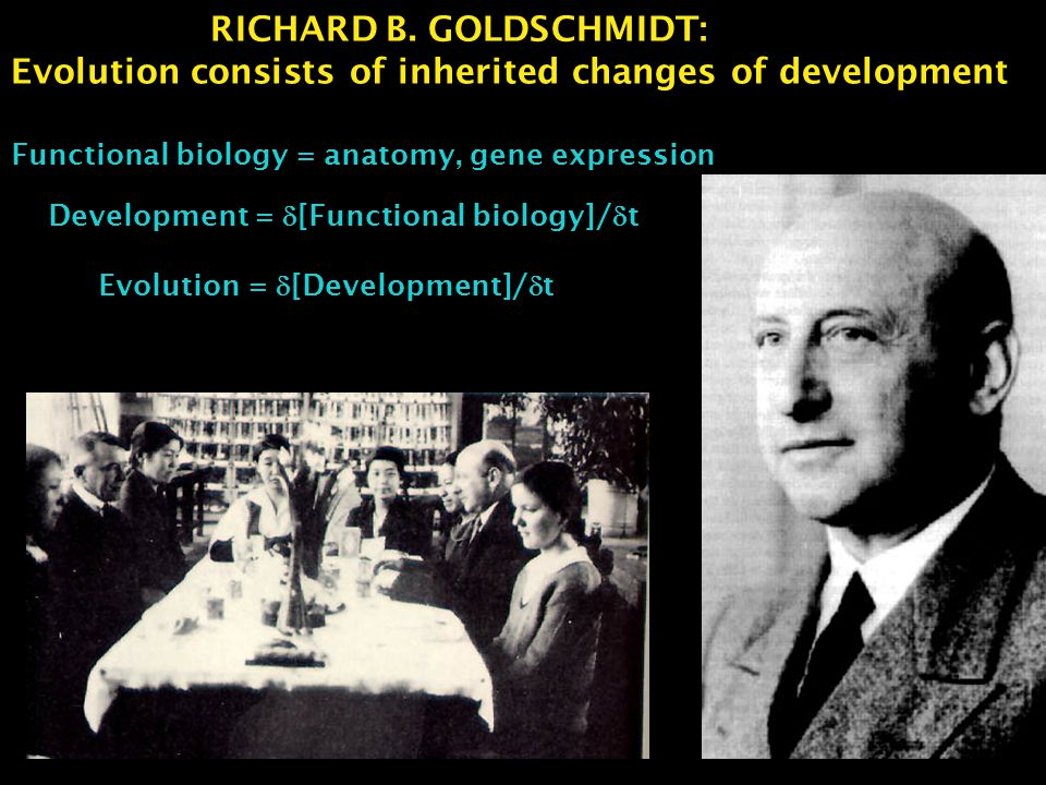 RICHARD B. GOLDSCHMIDT: Evolution consists of inherited changes of development Functional biology = anatomy, gene expression Development =  [Function