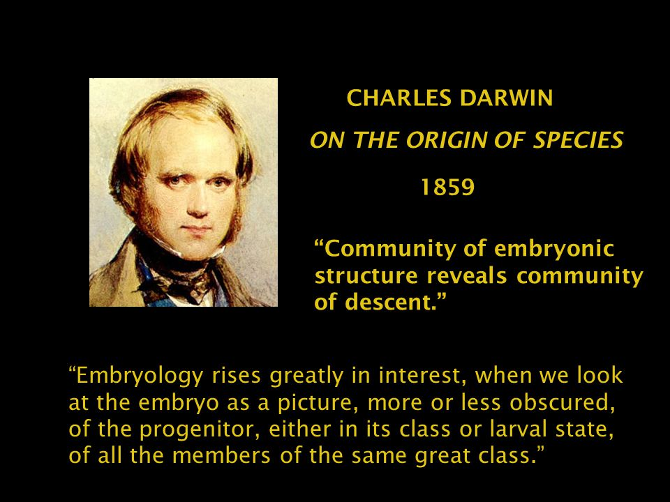 """Community of embryonic structure reveals community of descent."" CHARLES DARWIN ON THE ORIGIN OF SPECIES 1859 ""Embryology rises greatly in interest, w"