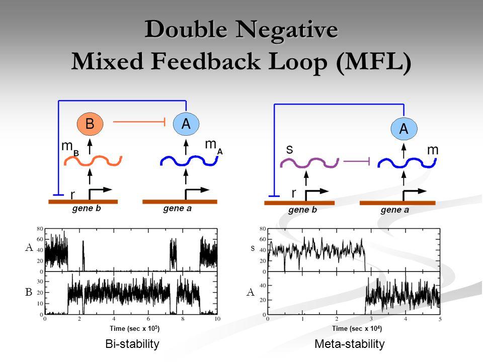 Double Negative Mixed Feedback Loop (MFL) Time (sec x 10 5 ) Bi-stability Time (sec x 10 4 ) Meta-stability A B s A