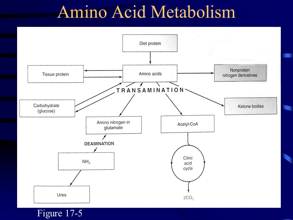 Figure 17-5 Amino Acid Metabolism
