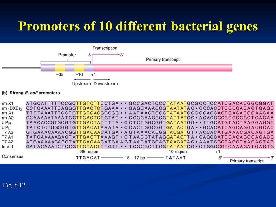 Promoters of 10 different bacterial genes Fig. 8.12