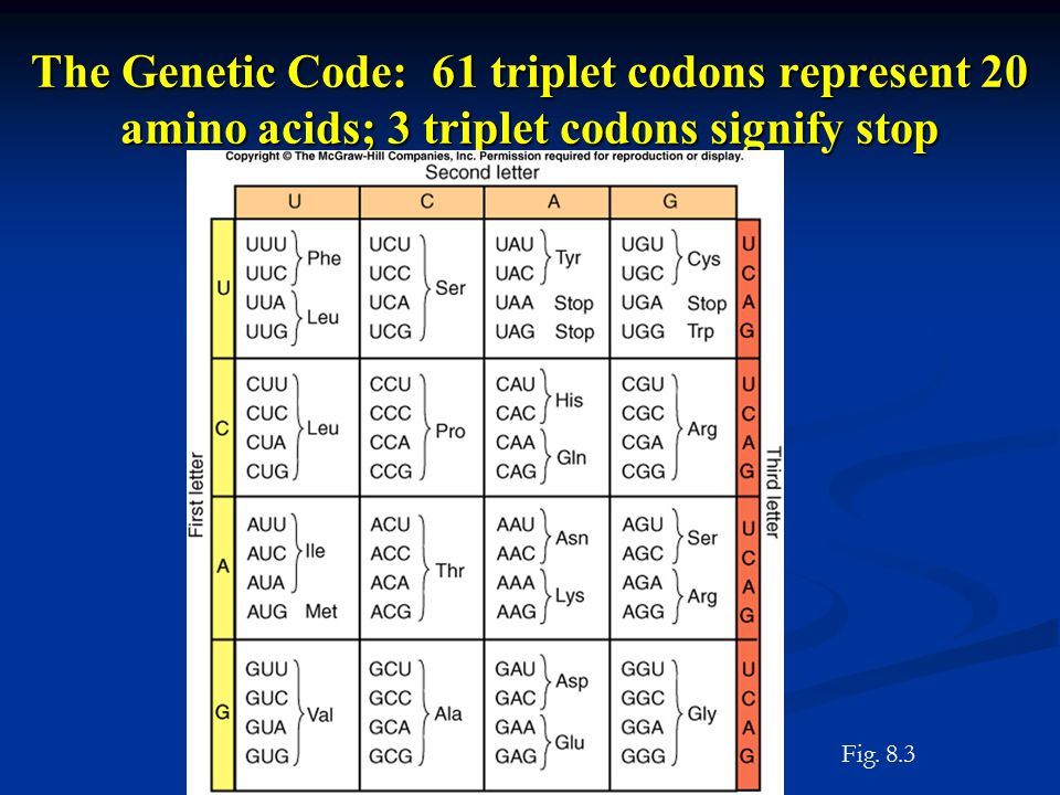 The Genetic Code: 61 triplet codons represent 20 amino acids; 3 triplet codons signify stop Fig.