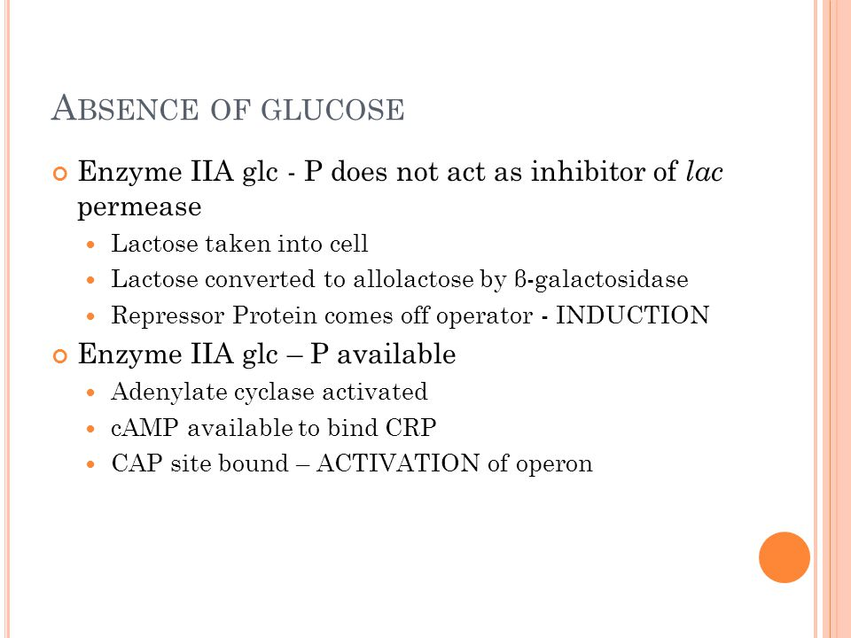 A BSENCE OF GLUCOSE Enzyme IIA glc - P does not act as inhibitor of lac permease Lactose taken into cell Lactose converted to allolactose by β-galactosidase Repressor Protein comes off operator - INDUCTION Enzyme IIA glc – P available Adenylate cyclase activated cAMP available to bind CRP CAP site bound – ACTIVATION of operon