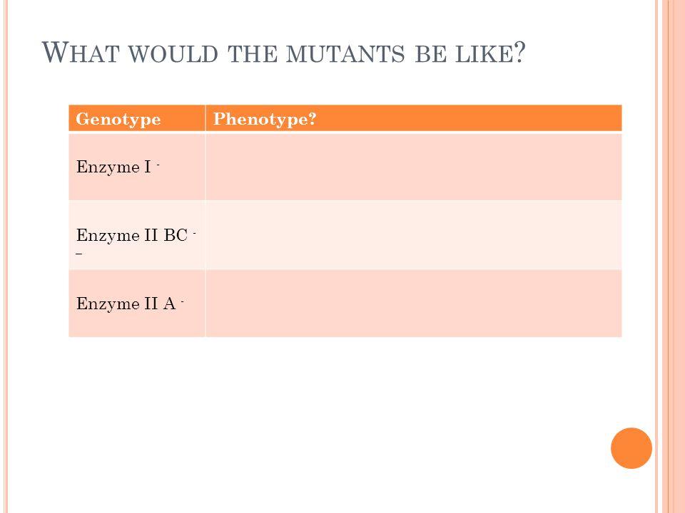 W HAT WOULD THE MUTANTS BE LIKE ? GenotypePhenotype? Enzyme I - Enzyme II BC - – Enzyme II A -