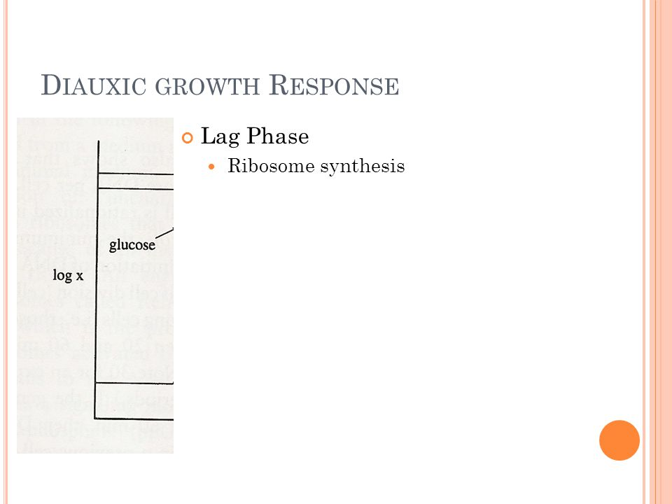 D IAUXIC GROWTH R ESPONSE Lag Phase Ribosome synthesis