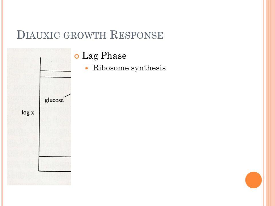 D IAUXIC GROWTH R ESPONSE Lag Phase Ribosome synthesis