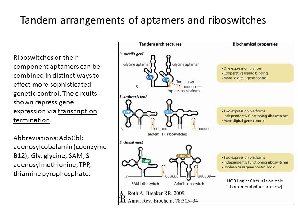 Riboswitches or their component aptamers can be combined in distinct ways to effect more sophisticated genetic control.