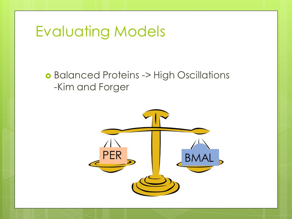 Evaluating Models  Balanced Proteins -> High Oscillations -Kim and Forger BMAL PER