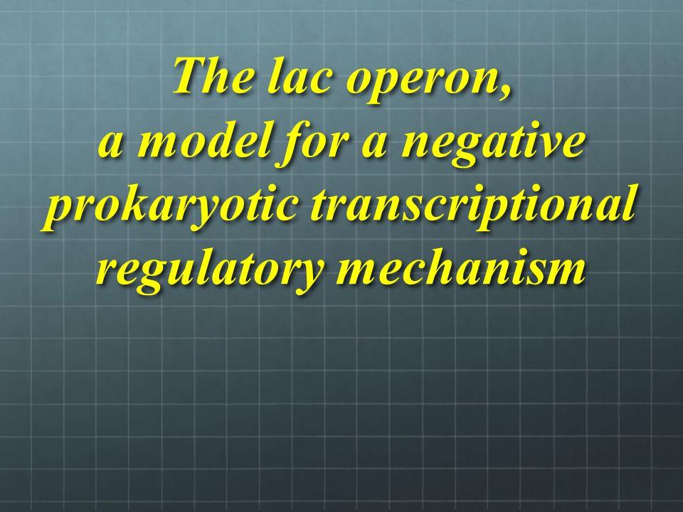 The lac operon, a model for a negative prokaryotic transcriptional regulatory mechanism
