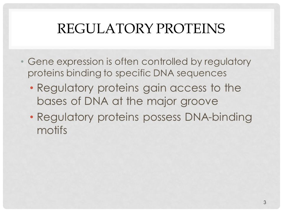 REGULATORY PROTEINS Gene expression is often controlled by regulatory proteins binding to specific DNA sequences Regulatory proteins gain access to th