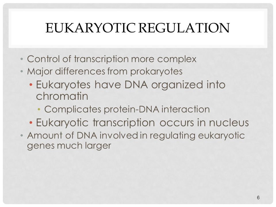 EUKARYOTIC REGULATION Control of transcription more complex Major differences from prokaryotes Eukaryotes have DNA organized into chromatin Complicate