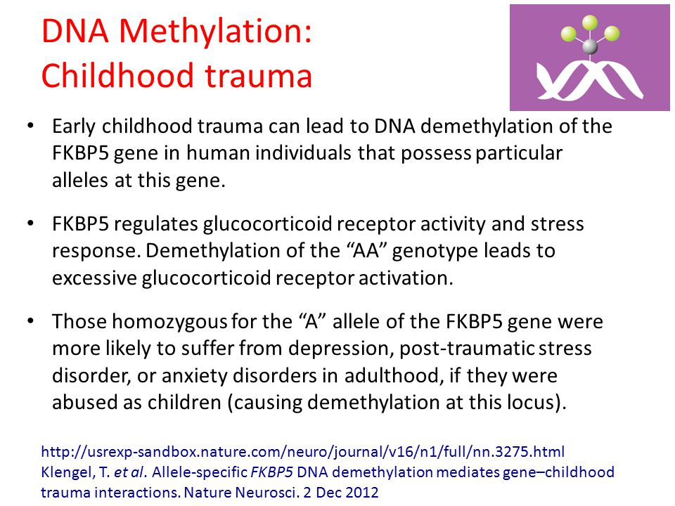 DNA Methylation: Childhood trauma Early childhood trauma can lead to DNA demethylation of the FKBP5 gene in human individuals that possess particular