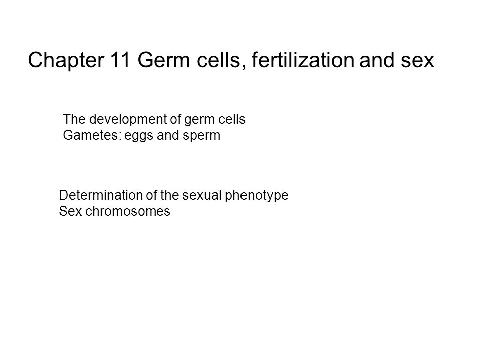 Chapter 11 Germ cells, fertilization and sex The development of germ cells Gametes: eggs and sperm Determination of the sexual phenotype Sex chromosomes