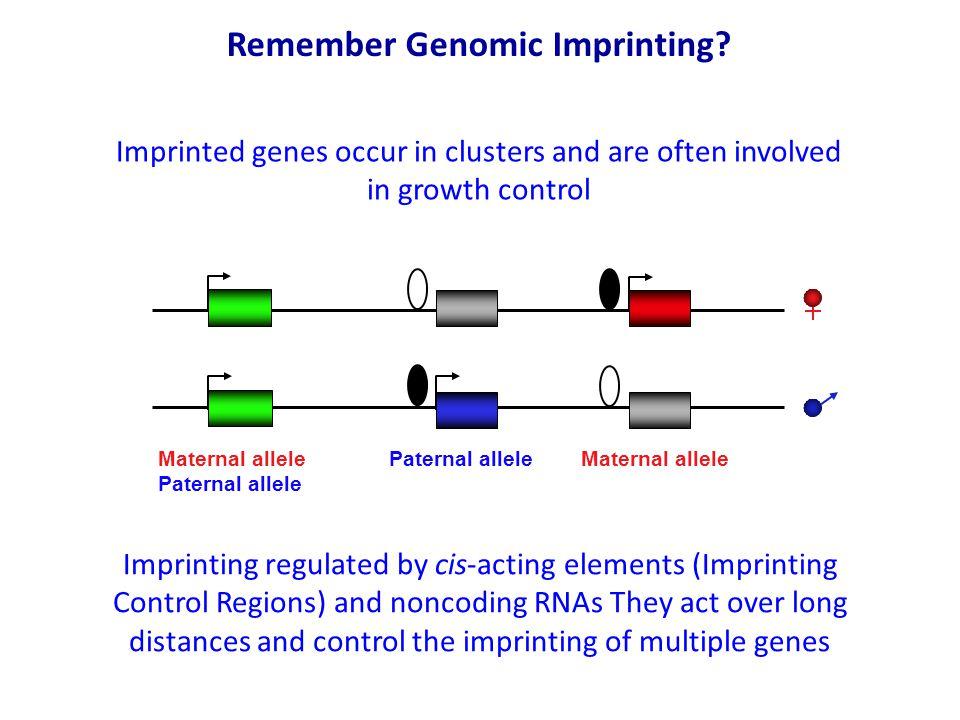 Remember Genomic Imprinting.