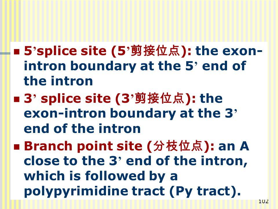 102 5 ' splice site (5 ' 剪接位点 ): the exon- intron boundary at the 5 ' end of the intron 3 ' splice site (3 ' 剪接位点 ): the exon-intron boundary at the 3