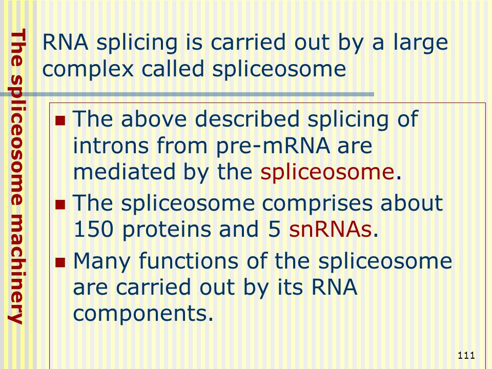 111 RNA splicing is carried out by a large complex called spliceosome The above described splicing of introns from pre-mRNA are mediated by the splice
