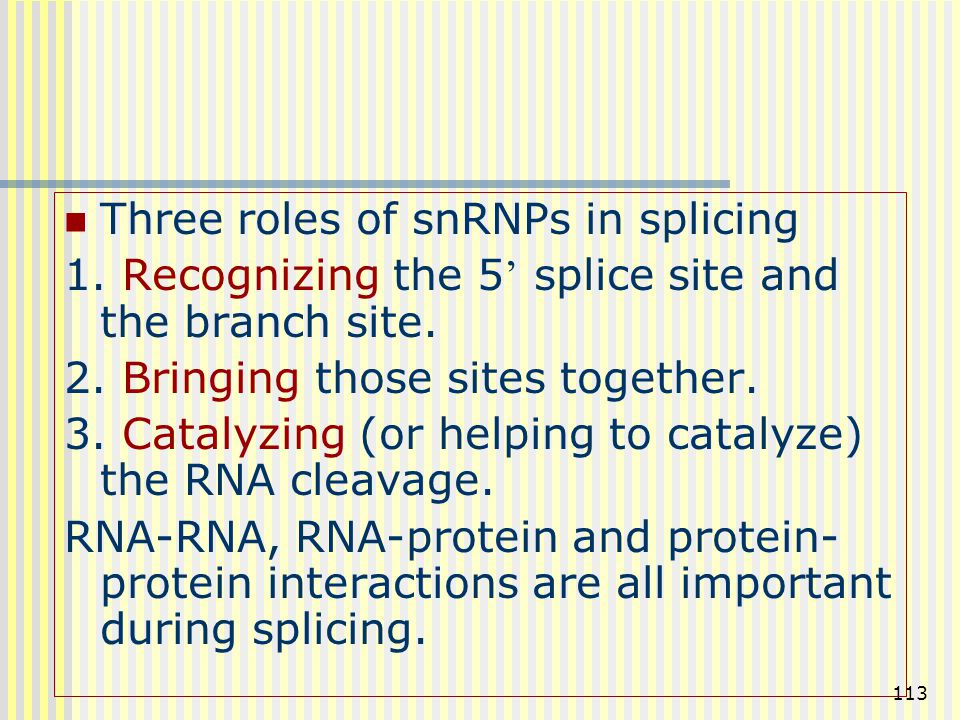 113 Three roles of snRNPs in splicing 1. Recognizing the 5 ' splice site and the branch site. 2. Bringing those sites together. 3. Catalyzing (or help
