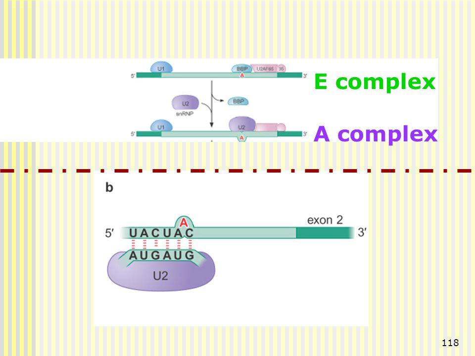 118 E complex A complex