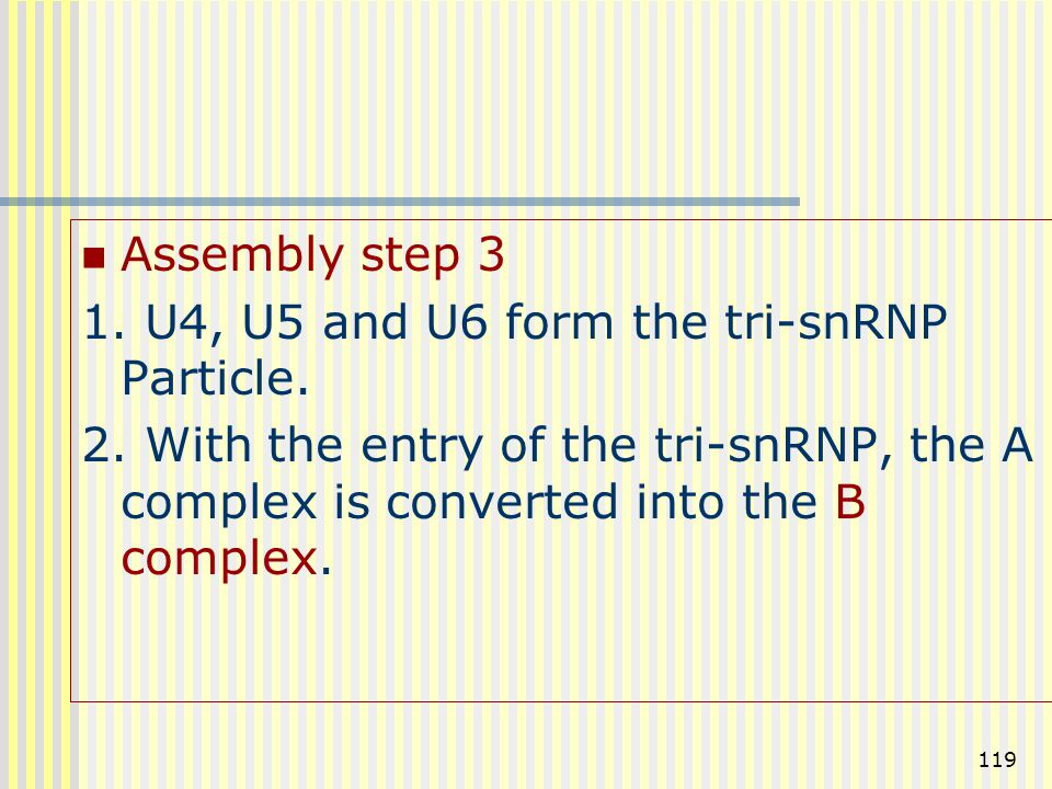 119 Assembly step 3 1. U4, U5 and U6 form the tri-snRNP Particle. 2. With the entry of the tri-snRNP, the A complex is converted into the B complex.