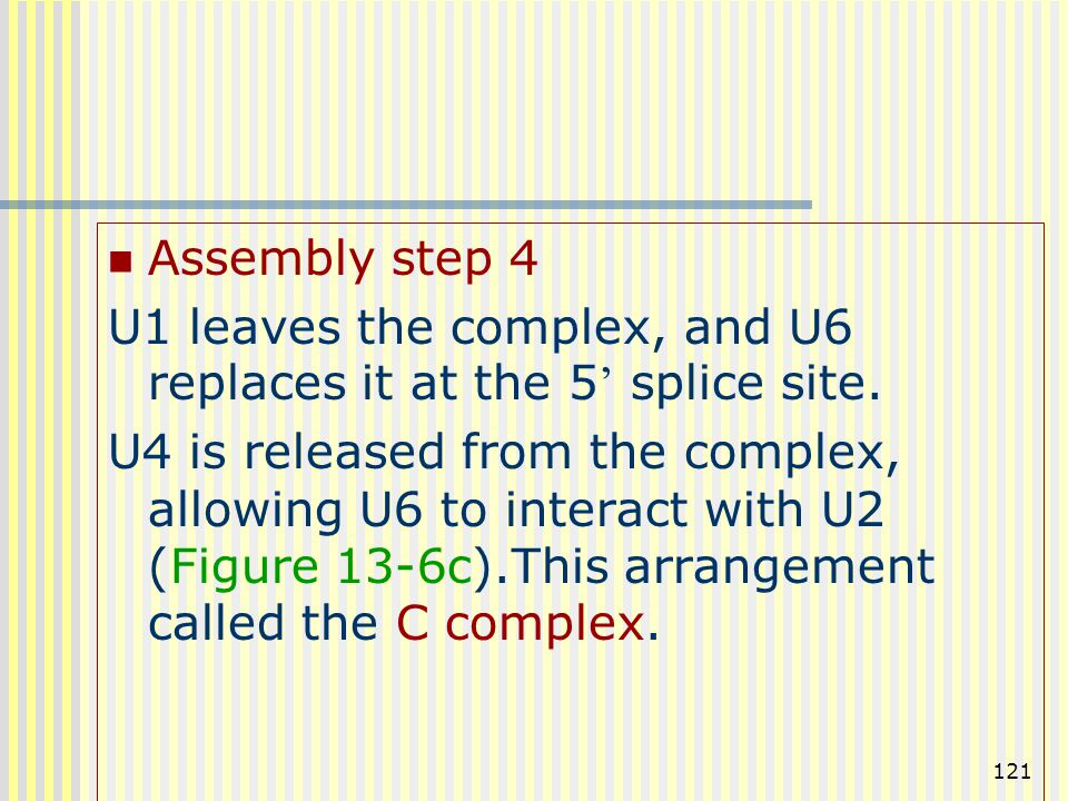 121 Assembly step 4 U1 leaves the complex, and U6 replaces it at the 5 ' splice site. U4 is released from the complex, allowing U6 to interact with U2