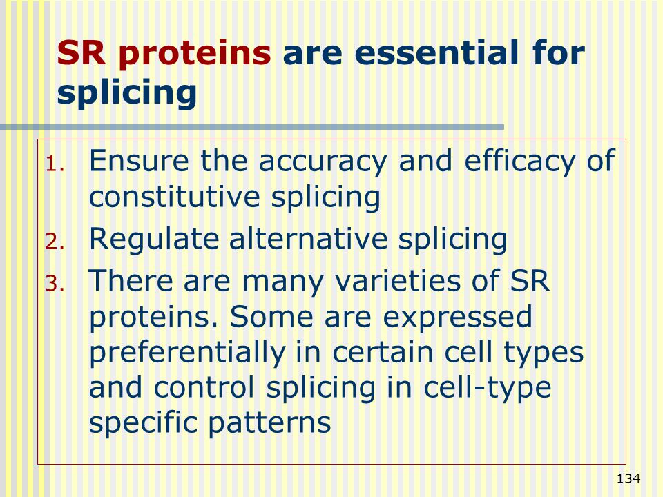 134 1. Ensure the accuracy and efficacy of constitutive splicing 2. Regulate alternative splicing 3. There are many varieties of SR proteins. Some are