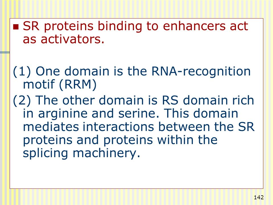 142 SR proteins binding to enhancers act as activators. (1) One domain is the RNA-recognition motif (RRM) (2) The other domain is RS domain rich in ar