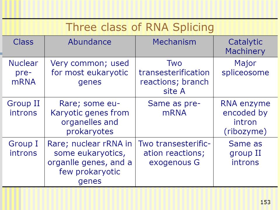 153 Three class of RNA Splicing ClassAbundanceMechanismCatalytic Machinery Nuclear pre- mRNA Very common; used for most eukaryotic genes Two transeste