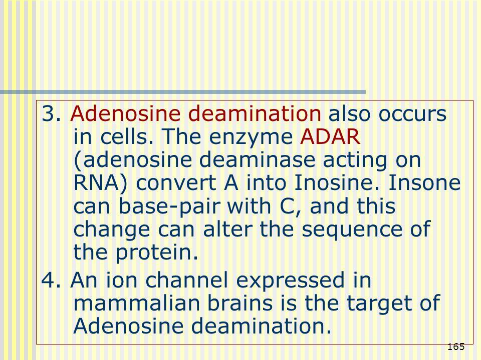 165 3. Adenosine deamination also occurs in cells. The enzyme ADAR (adenosine deaminase acting on RNA) convert A into Inosine. Insone can base-pair wi