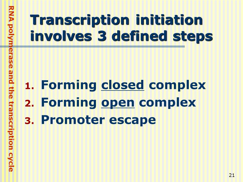 21 Transcription initiation involves 3 defined steps 1. Forming closed complex 2. Forming open complex 3. Promoter escape RNA polymerase and the trans