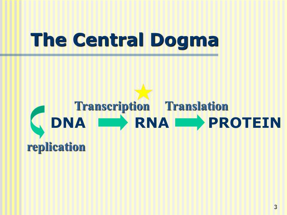 3 The Central Dogma DNA RNA PROTEIN Transcription Translation replication