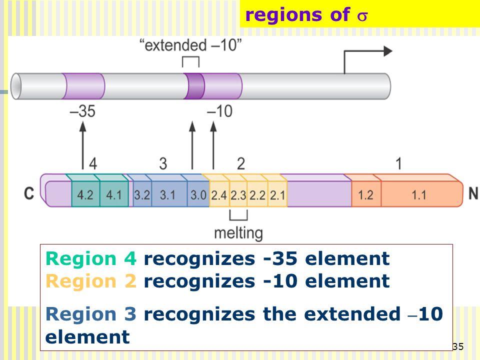 35 regions of  Region 4 recognizes -35 element Region 2 recognizes -10 element Region 3 recognizes the extended – 10 element
