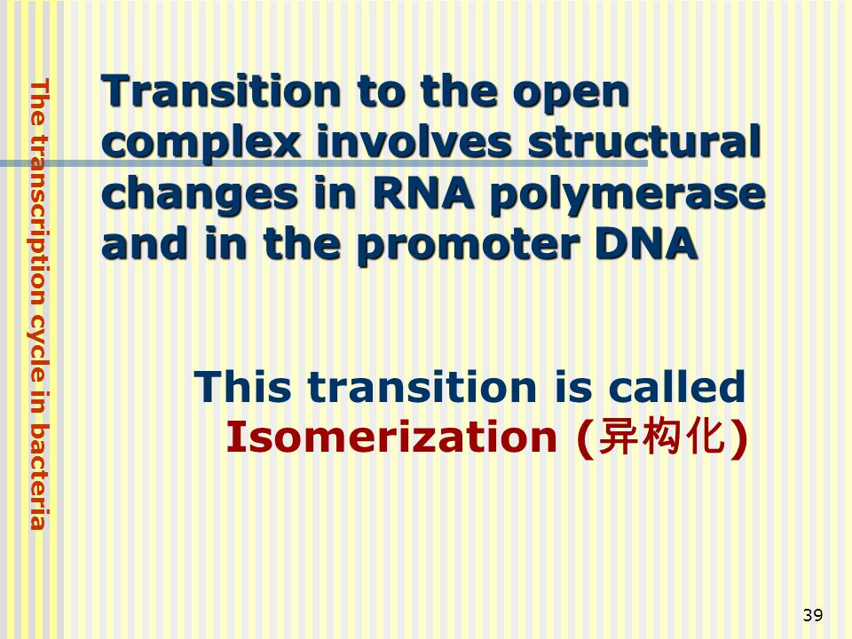 39 Transition to the open complex involves structural changes in RNA polymerase and in the promoter DNA This transition is called Isomerization ( 异构化