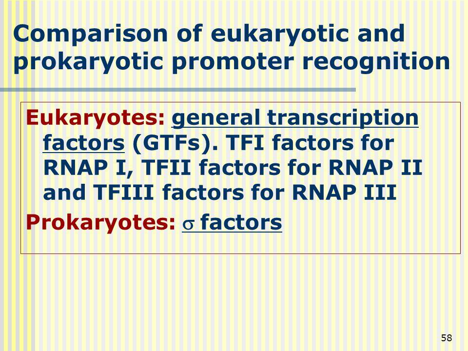 58 Comparison of eukaryotic and prokaryotic promoter recognition Eukaryotes: general transcription factors (GTFs). TFI factors for RNAP I, TFII factor