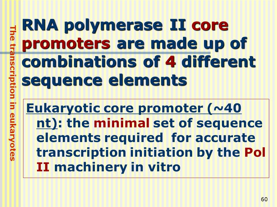 60 RNA polymerase II core promoters are made up of combinations of 4 different sequence elements Eukaryotic core promoter (~40 nt): the minimal set of