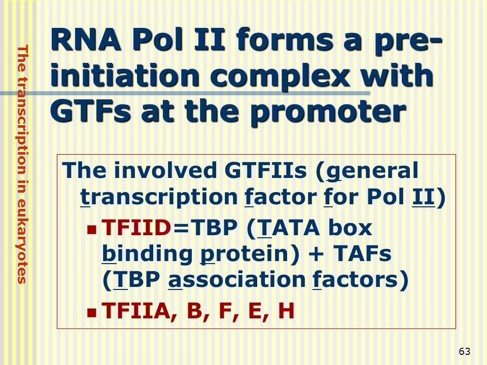 63 RNA Pol II forms a pre- initiation complex with GTFs at the promoter The involved GTFIIs (general transcription factor for Pol II) TFIID=TBP (TATA