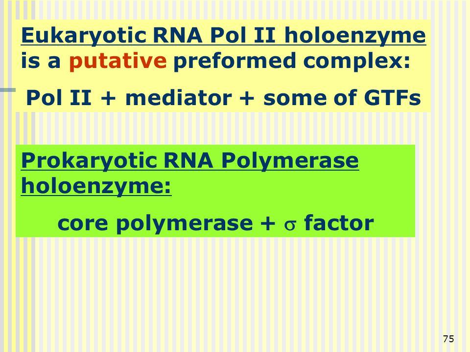75 Eukaryotic RNA Pol II holoenzyme is a putative preformed complex: Pol II + mediator + some of GTFs Prokaryotic RNA Polymerase holoenzyme: core poly