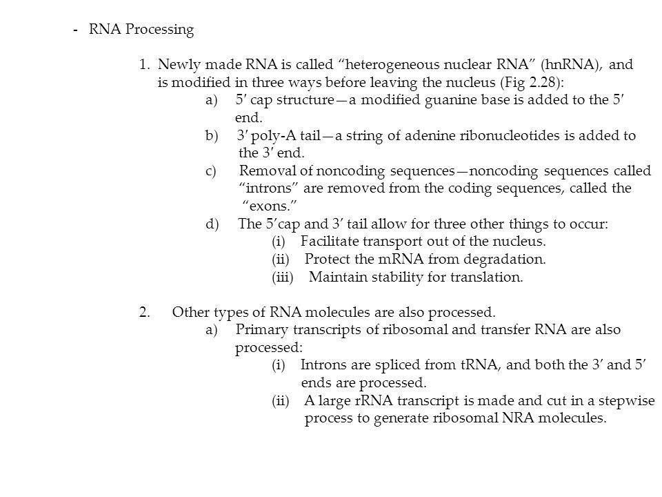 """- RNA Processing 1. Newly made RNA is called """"heterogeneous nuclear RNA"""" (hnRNA), and is modified in three ways before leaving the nucleus (Fig 2.28):"""