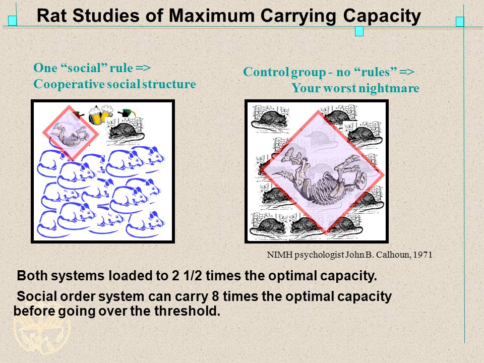 Rat Studies of Maximum Carrying Capacity Social order system can carry 8 times the optimal capacity before going over the threshold.