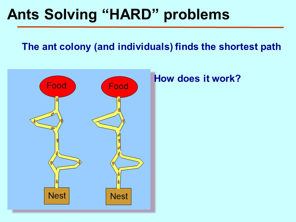 The ant colony (and individuals) finds the shortest path Nest Food Nest Food How does it work.