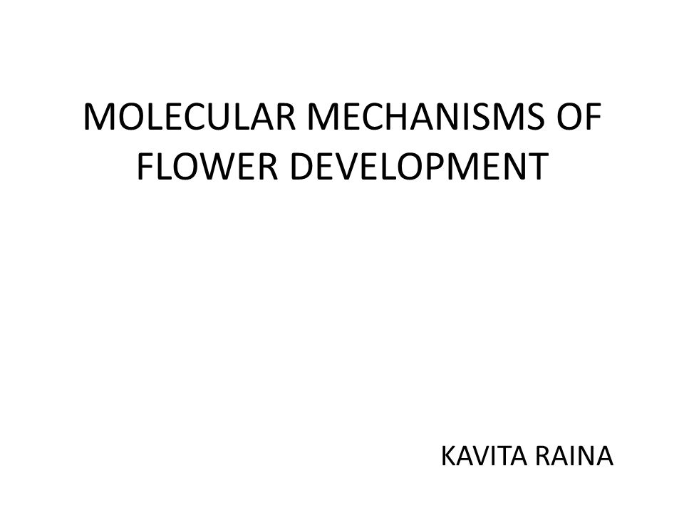 MOLECULAR MECHANISMS OF FLOWER DEVELOPMENT KAVITA RAINA